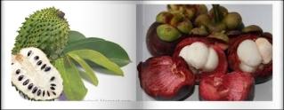 Obat Alami Endokarditis Infektif